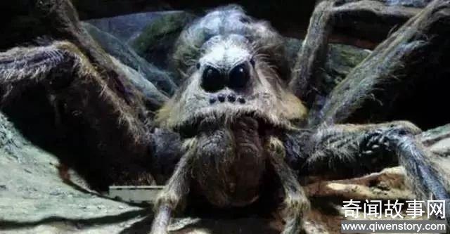 诡异动物,第4种在中国发现,一只卖160万